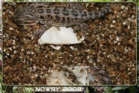 Mes repties 2009 Naiss-pogo-03