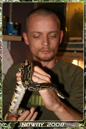 python regius Regius03